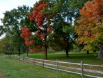 Autumn Country