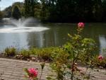 Rosy Pond