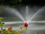 Rose Springs