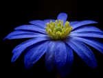Pretty Blue Flower