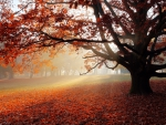 Lonely Tree in Autumn Forest