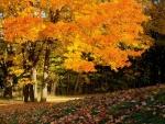 Beautiful Golden Tree