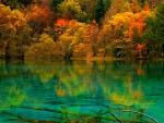 Autumn Trees on Turquoise Lake