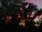 Pink Sunset Through the Trees