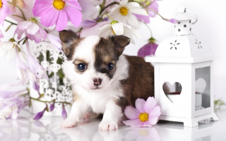 Adorable Puppy - adorable, sweet, dog face, cute, puppies, animals, dogs, puppy, dog