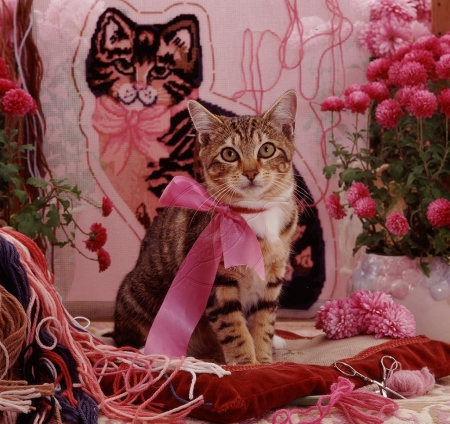 Tabby cat in pink ribbon - pink ribbon, cats, animals, kitty