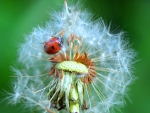Fluffy home for a ladybug