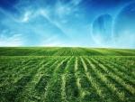 natural greenery