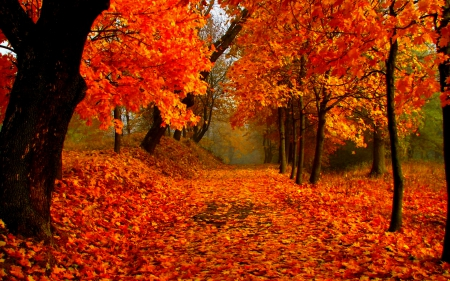 Autumn park - forest, colorful, fall, autumn, lovely, beautiful, park, trees, leaves, branches