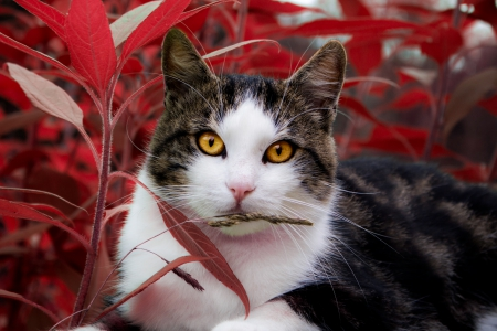 Oktober cat - red, autumn, neko, cat, helloween, greetings, nature, eyes, october
