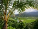 Field in Kauai, Hawaii