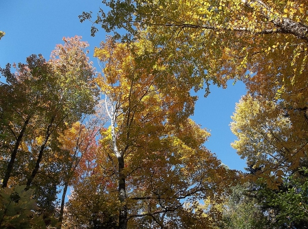 Autumn in Maine - fall, leaves, sky, Maine, trees, autumn