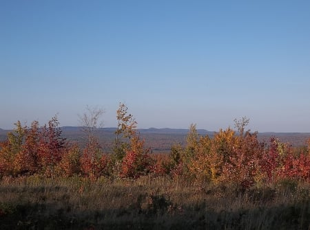 Autumn in Maine - fall, autumn, leaves, Maine, trees, sky