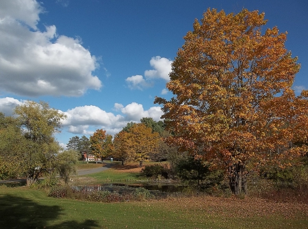 Autumn in Maine - fall, autumn, leaves, Maine, sky