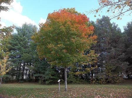 Autumn in Maine - fall, tree, leaves, Maine, Autumn, sky