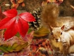 Squirrel in autumn forest
