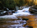 Elkmont Stream, Great Smoky Mountains