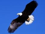 soaring liberty