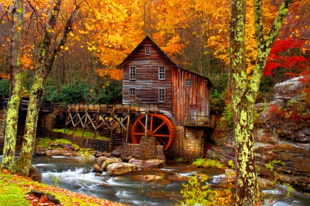 Forest mill in autumn