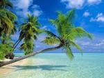 Coconut Palms on Tropical Beach