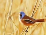 Colored bird
