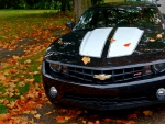 Autumn Camaro