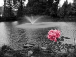 Pink Monochrome Pond