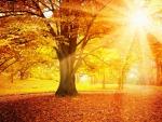 Morning Sunrays