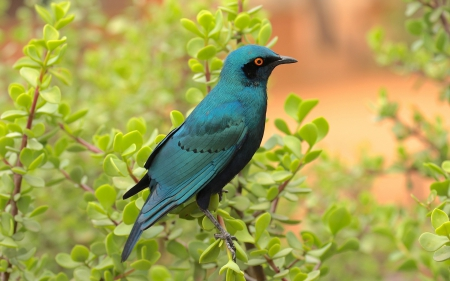Teal-Colored Bird on a Branch - blue bird, birds, teal-colored bird, animals