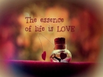 The Essence of Life is....