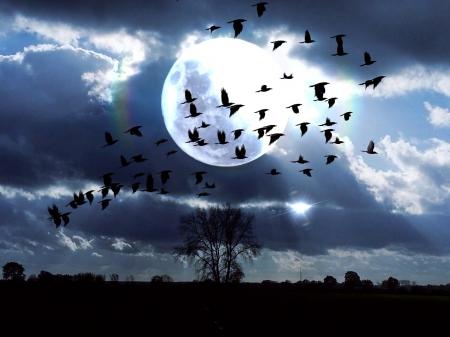Birds Fly At Moonlight Night Birds Animals Background