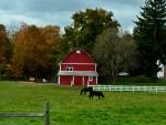 Serene Country scene
