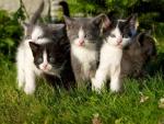 cute kittens in a backyard