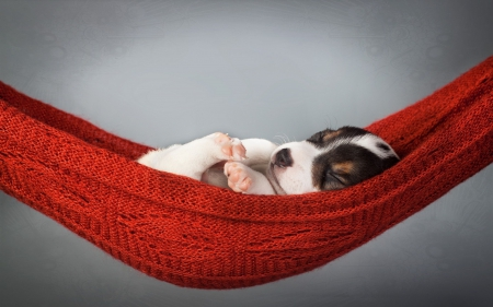 Sleeping puppy - Hammock, Red, Sleeping puppy, dog