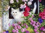 ..Fluffy Kitten..