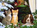 ..Pets in Christmas..