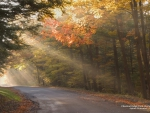 Sun Shining on Autumn Road