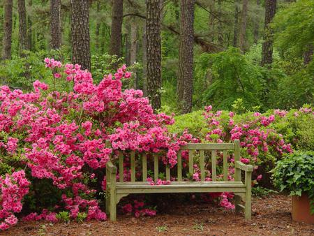 Tranquil Bench Seat Flowers Amp Nature Background