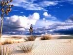 Desert Landscape - hdr