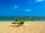 Lone Plant on Tropical Beach
