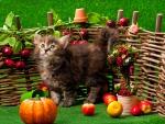 Autumn Siberian Kitten