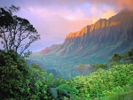 Rainforest and Mountain Landscape