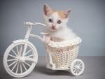 bicycle kitten