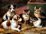 Kittens and Puppies F