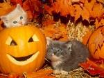 two kittens and Halloween pumpkins
