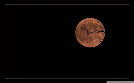 Halloween Moon - Samhain, Moon, Halloween, Autumn, Night