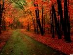 Orange Forest
