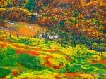 Alaskan Landscape in Autumn