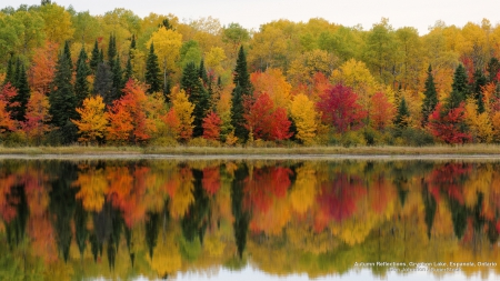 Autumn Lake Reflection - autumn, lakes, nature, forests, trees