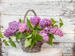 Lilac In Basket